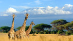 Crash in Tourism Means Africa Will Lose $120 billion