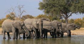 Zimbabwe U-Turns and Bans Chinese Coal Mining in National Park