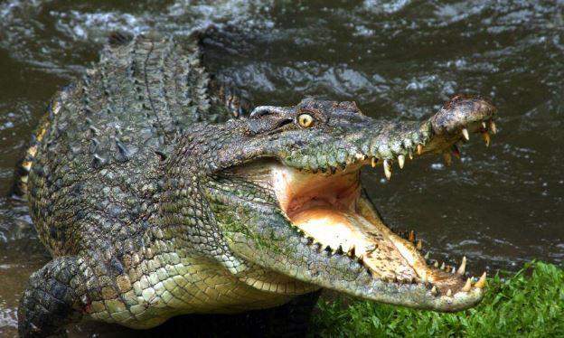 Rwandan Man Killed And Eaten By Crocodile While Defying Curfew